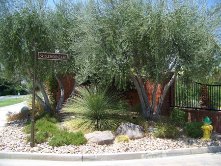 Entry Gate Landscaping Rancho Mirage Ca