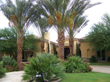 New Landscape Rancho Mirage Ca
